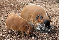 Zoo Landau 2015-07_10