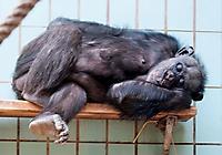 Zoo Landau 2015-07_24