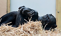 Zoo Landau 2015-07_25