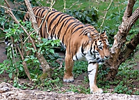 Zoo Landau 2015-07_3