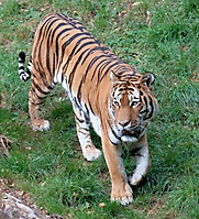 Zoo Landau 2015-07_5