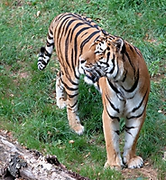 Zoo Landau 2015-07_6