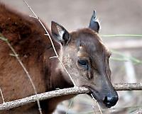 Zoo Landau 2015-07_7