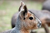 Zoo Landau 2015-07_8